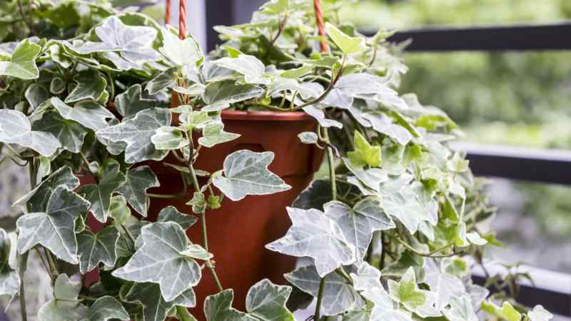 A List of the Best Low-Maintenance Plants For Your Home
